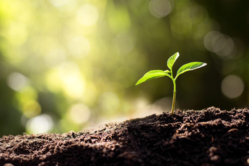 Earthy & Green – Making India the biggest market for safe and organic food
