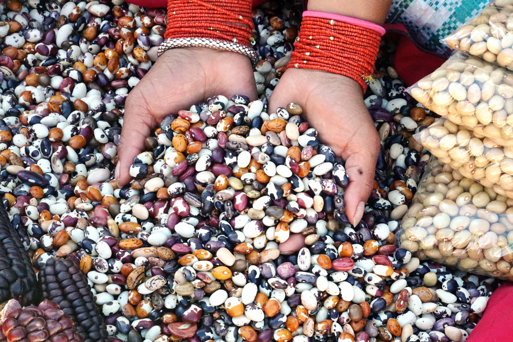 Baseline study for Climate Resilience through Indigenous Seeds Systems Project